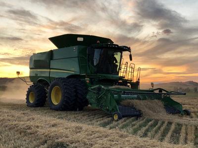 Bennink-Farms-Ltd-Barley-field-near-Pincher-Creek