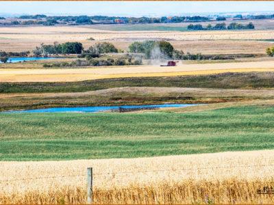 Frank-Shufetoski-Alberta-prairie-mosiac_F5S5353