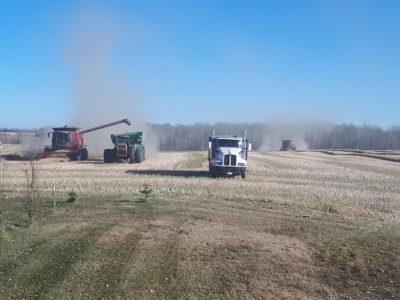 tischer-farms-harvest
